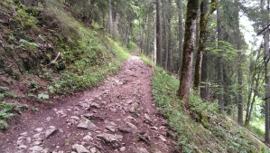 The trail includes segments like this one through the forest