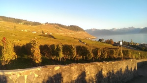 vinyards along Lake Geneva