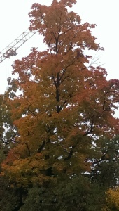 Tree and crane
