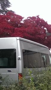 Tree and van