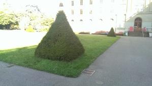 Pyramid tree