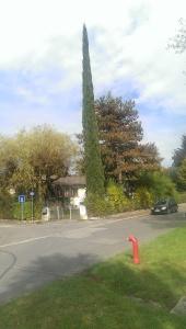 Tall skinny tree