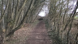 typical trail segment