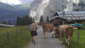 Swiss Alpine Wildlife!