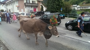 Cow with floral hat
