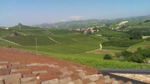 Slate tile roofs and vineyards
