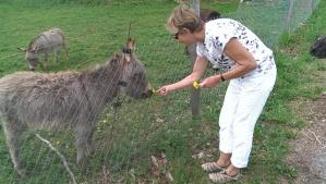 Lady feeding a donkey on the Saleve