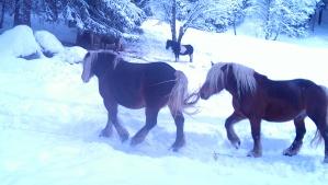 Horses in Chamonix